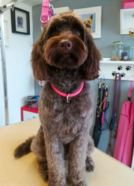 Dog Grooming Comrie